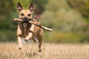 How Does an Invisible Electric Dog Fence Work?